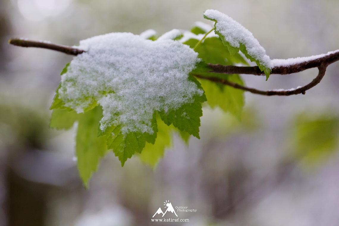 Wiosenna wędrówka na Wysoki Kamień, Góry Izerskie, www.katiraf.com
