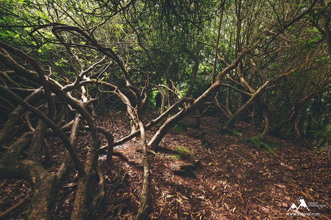 Spacer w Hawkstone Park Follies, Shropshire, www.katiraf.com